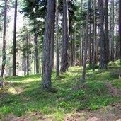 Wald bei Völser Weiher