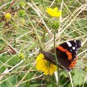 Schmetterlinge Seiser Alm