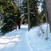D-0989-seiser-alm-hans-paula-steger-weg-winter-waldabschnitt.jpg