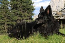Hund Haustier -> Hund in der Natur 2011