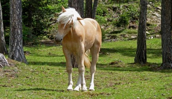 Pferd Reiten Lernen Pferde Reiten Haflinger Vols