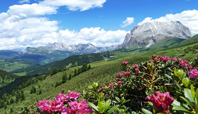 Wanderung zum Berghaus Zallinger, Foto: AT, © Peer