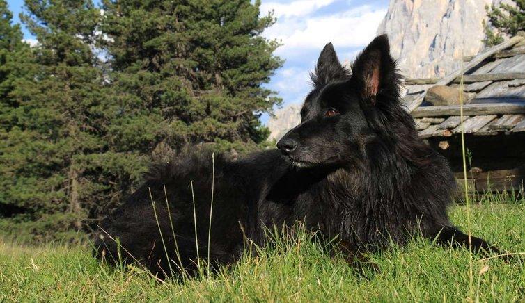 Hund & Haustier, Foto: EMS, © Peer
