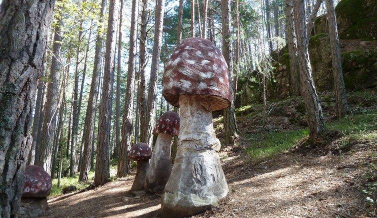 Sentiero dei Funghi, Foto: AT, © Peer